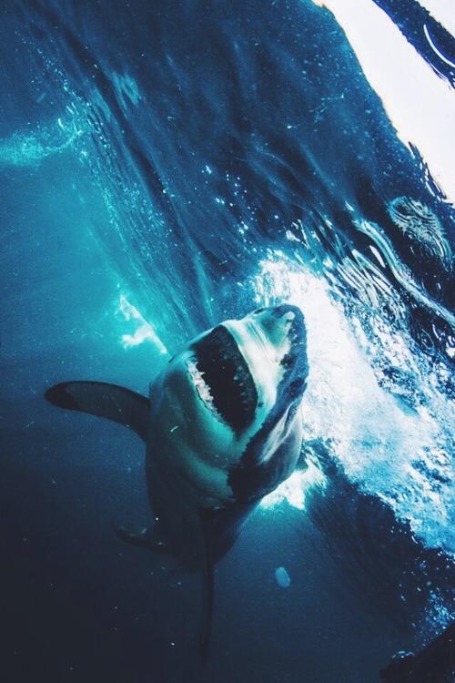 Hipster Girl Iphone Wallpaper Great White Shark Tumblr
