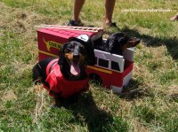 Crusoe the celebrity dachshund   Wiener Dog Costume ...