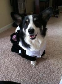 panda dog costume | Tumblr