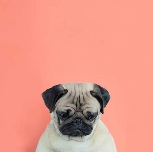 Husky Dog Hd Wallpapers Doge On Tumblr