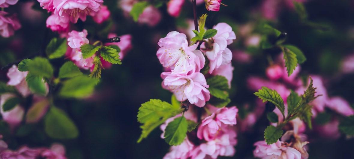 nature-flowers-vintage-plant