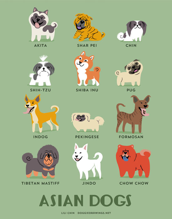From ASIA: Akita (Japan), Shar Pei (China), Chin (Japan), Shih-Tzu (China), Shiba-Inu (Japan), Pug (China), Indog (India), Pekingese (China), Formosan Mountain Dog (Taiwan), Tibetan Mastiff (Tibet), Jindo (Korea), Chow Chow (China).