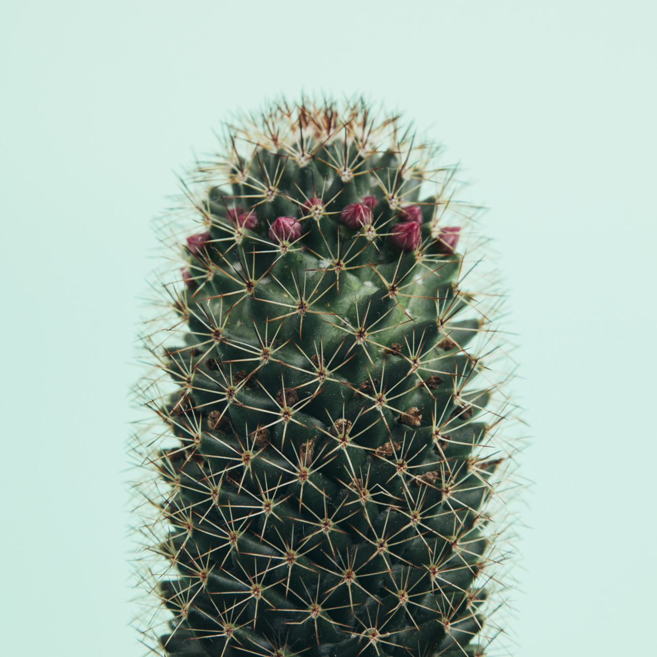 Plants Tumblr Cactus Cacti Typology Photographers On Tumblr Cacti And