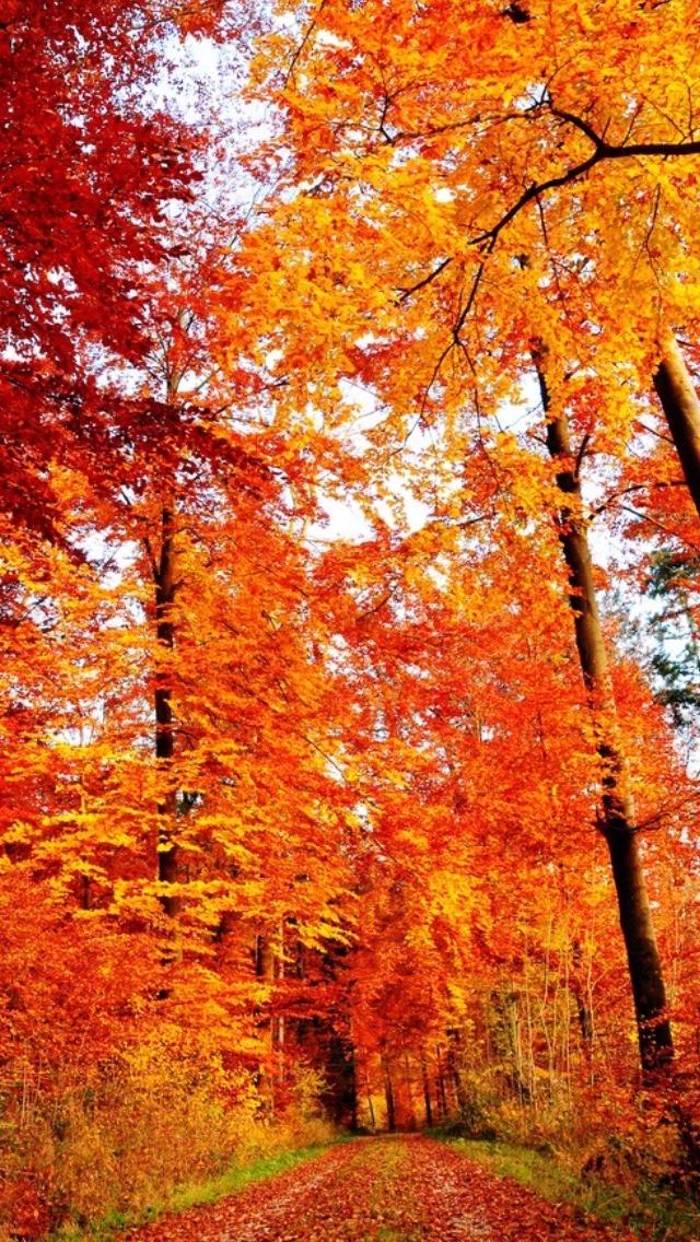 Fall Leaves Iphone 7 Wallpaper Iphone Orange Fall Nature Autumn Warm Seasons Cozy Leaves