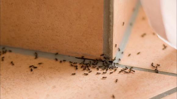The problem of Bed Bugs in London \u2022 Travel Blog
