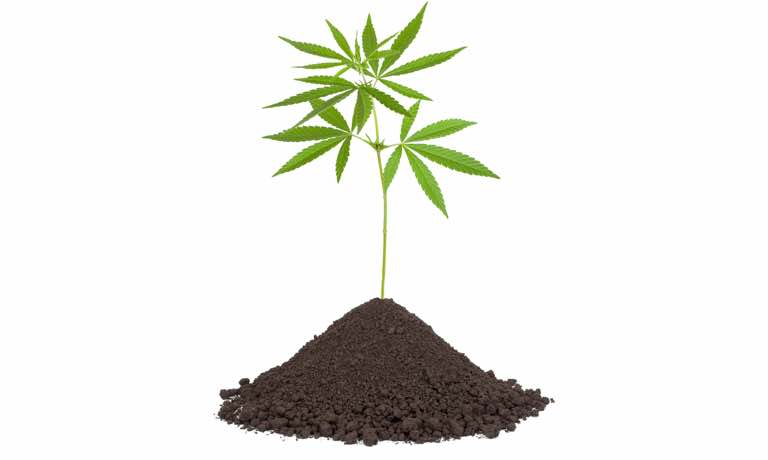 The 10 Best Nutrients for Outdoor Cannabis - Organic Nutrients and