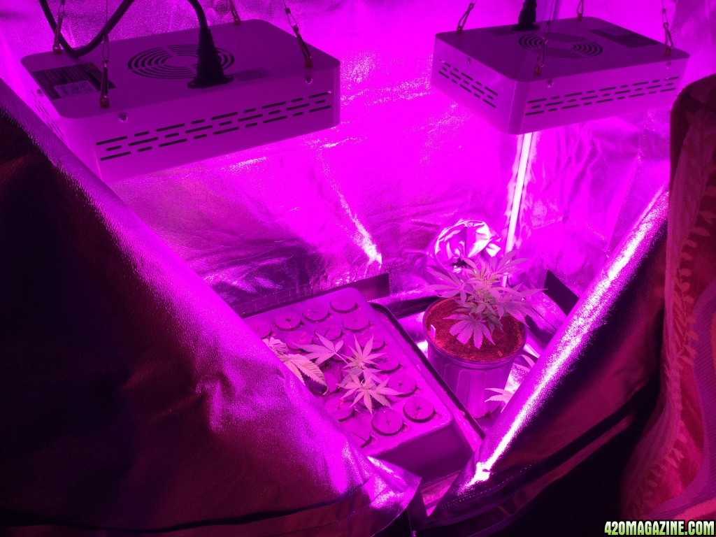 Mars Hydro Led Mars Hydro Led Grow Light Discussion Page 1122