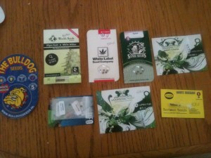 best marijuana seeds online