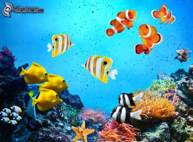 Tropical Ocean 3d Live Wallpaper Poissons De Corail