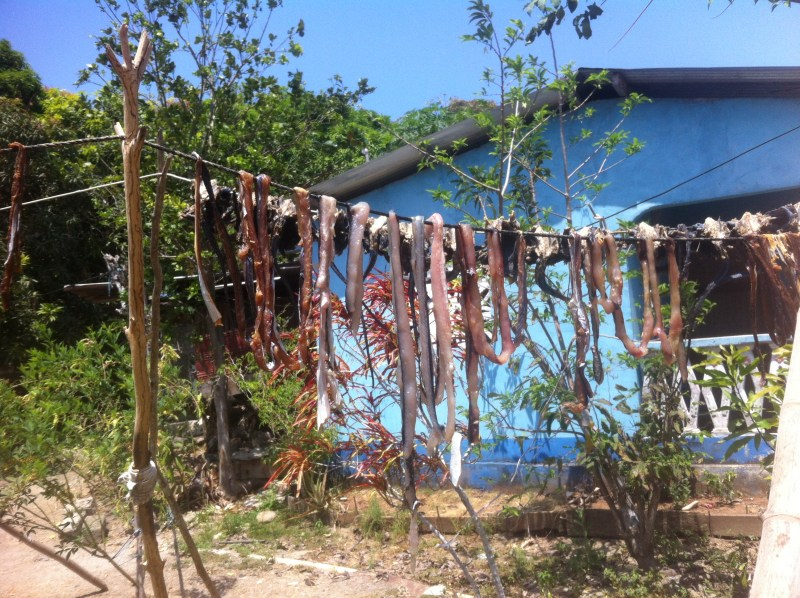 Iguana, fish and octopus drying on the line.