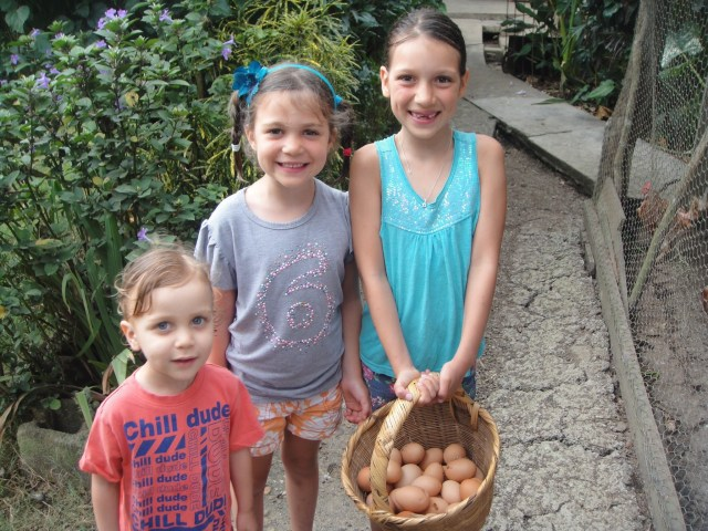 Fresh, Organic, Free Range Eggs. Ready to sell at the market.