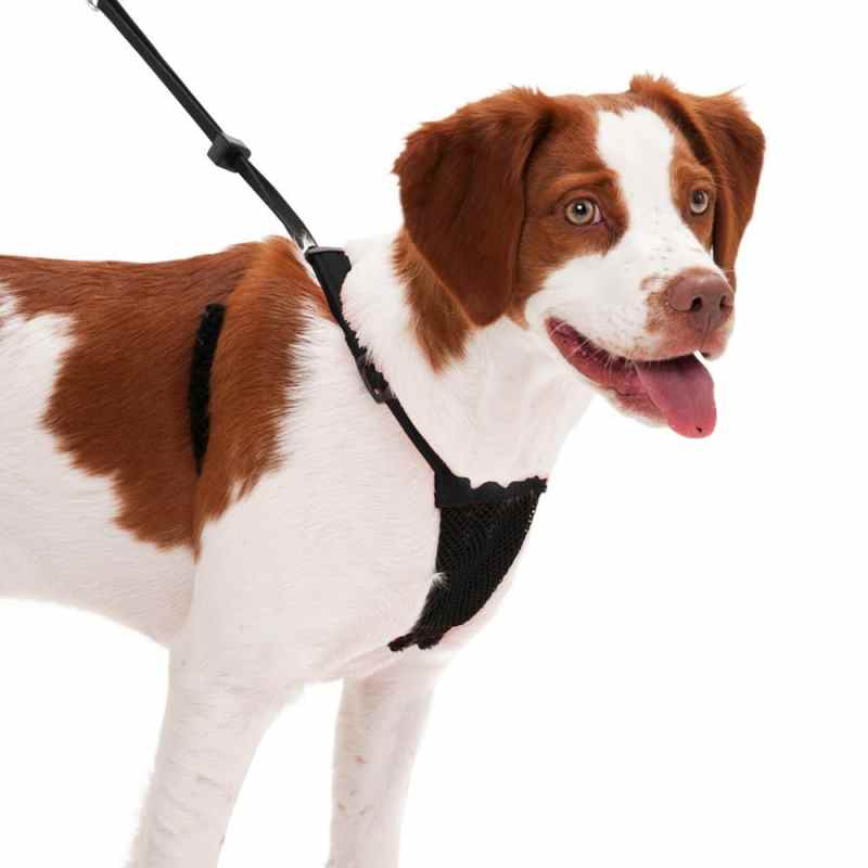 Large Of No Pull Dog Harness