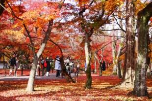 【熱血背包女】2011冬之京阪一個人小旅行~DAY2京都
