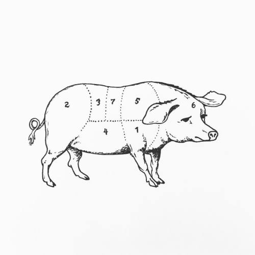 pig butcher drawing pig butcher drawing pig