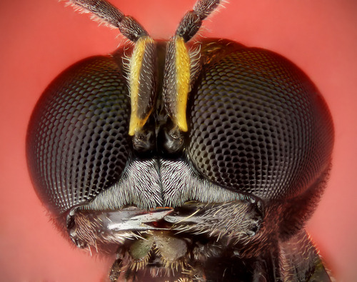 Txchnologist \u2014 Insect Eyes Inspire High-Tech Camera Optics