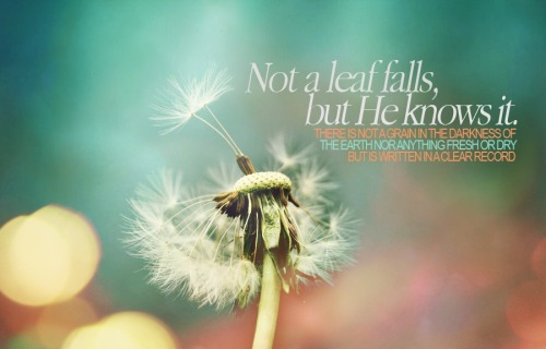 Leaf Wallpaper Quote Mac Beautiful Islamic Wallpapers And Islamic Quotes Page 1 Of 72