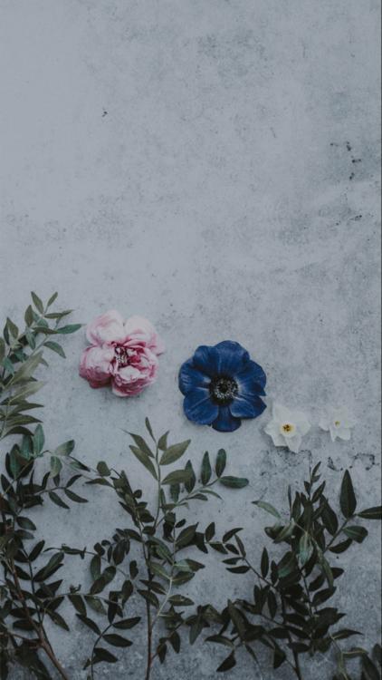 Hipster Wallpaper Iphone Vintage Rose Wallpaper Tumblr