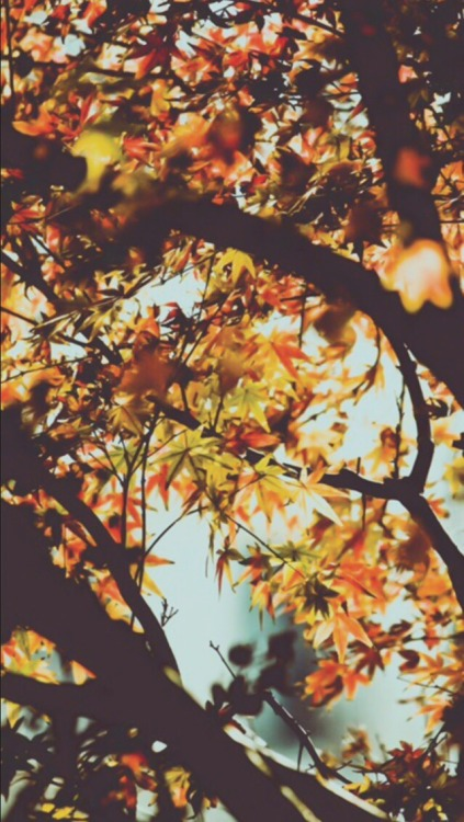 Fall Leaves Fox Wallpaper Autumn Wallpaper Tumblr
