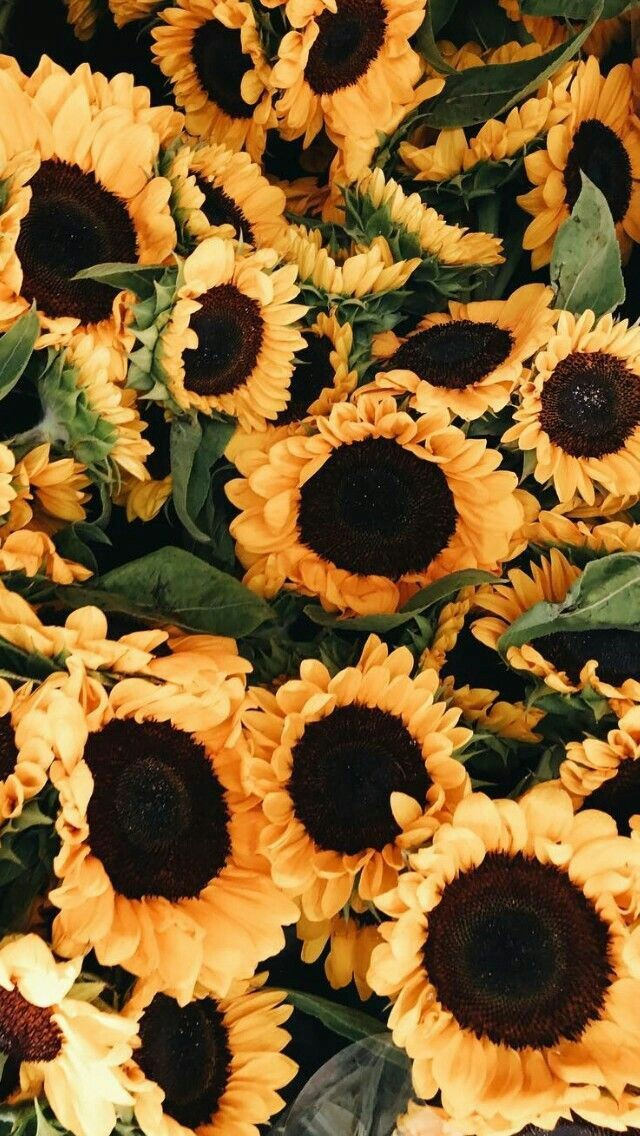 Fall Sunflower Desktop Wallpaper Fondo De Pantalla Lindo Tumblr