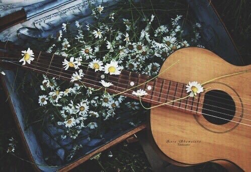 Black Daisy Wallpaper Vintage Guitars Tumblr