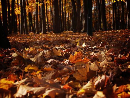 Fall Pumpkin Patch Wallpaper Fall Season On Tumblr