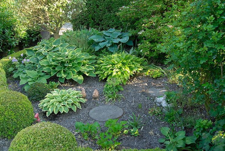 Meine Hostas im Juni - Mein schöner Garten Forum - mein schoner garten forum