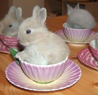 cute rabbit in a teacup | Tumblr