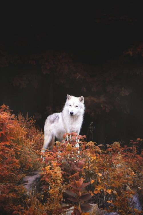 Sad Eyes Girl Wallpaper White Wolf On Tumblr