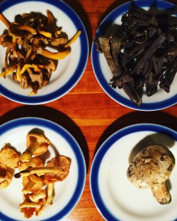 Mush/room: fungi cafe at DPAShop