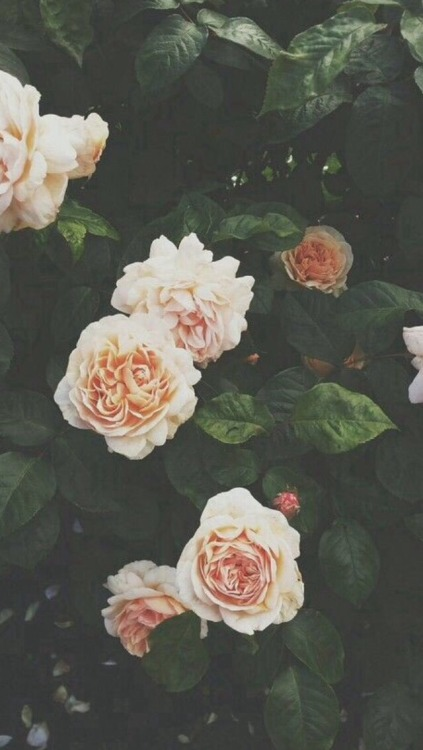 Wallpapers Hipster Iphone Floral Backgrounds Tumblr
