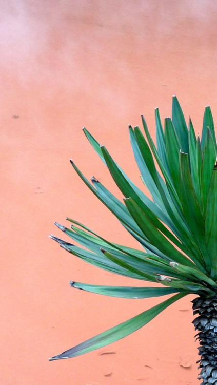 Palm Tree Iphone Wallpaper Palm Tree Wallpaper Tumblr