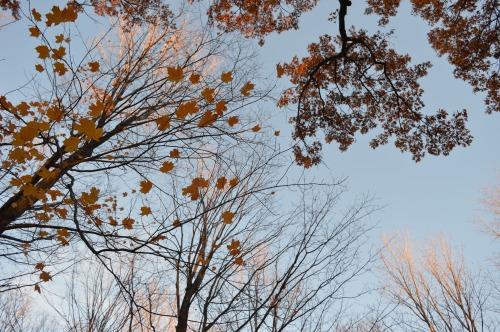 Fall Leaves Wallpaper Iphone Mac Wallpaper Tumblr
