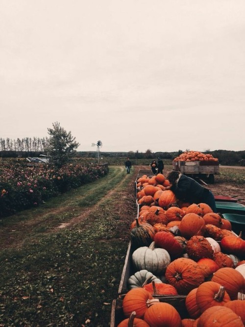 Fall Wallpaper With Pumpkins Harvest On Tumblr
