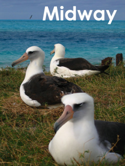 MIdway Atoll NWR. I worked with albatross and other nesting seabirds at this remote Hawaiian Island.