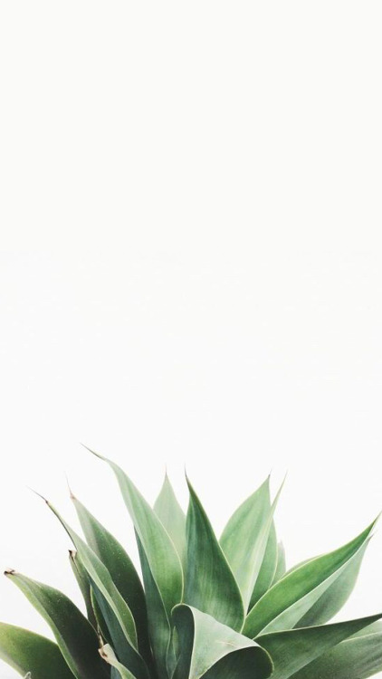Marble Iphone 6 Wallpaper Palm Trees Iphone Wallpapers Tumblr