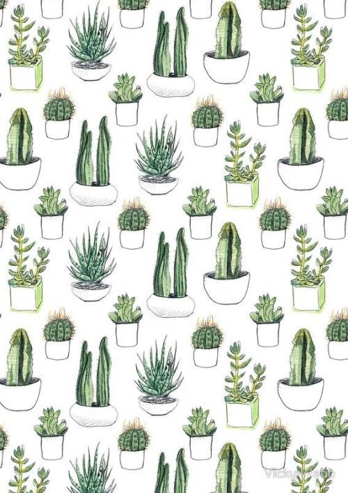Wallpaper Cute Pink For Iphone 6 Cacti Wallpaper Tumblr