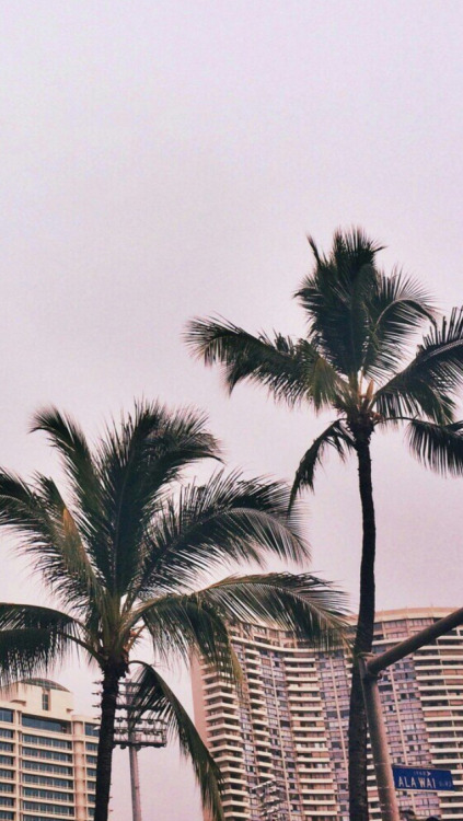 Wallpaper Los Angeles Iphone Palm Trees On Tumblr
