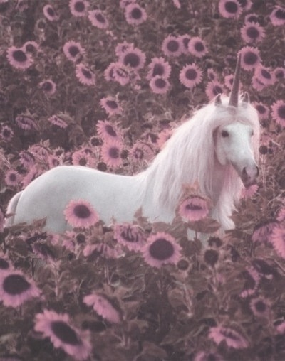 Positive Vibes Quotes Wallpaper Grunge Unicorn Tumblr