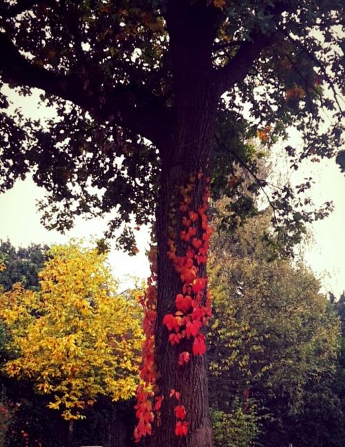 Skyrim Wallpaper Fall Herbst On Tumblr