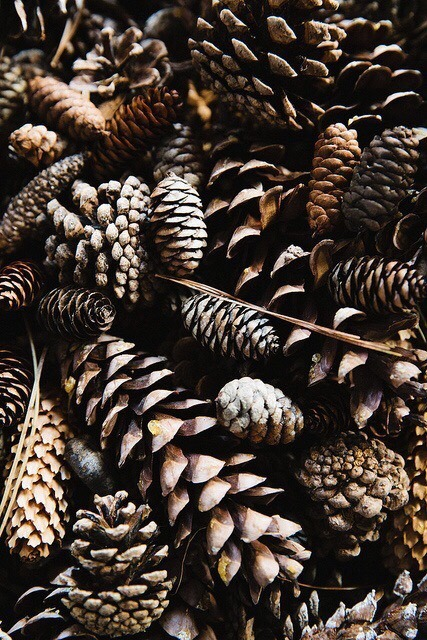 Fall Harvest Wallpaper Backgrounds Pinecones Tumblr
