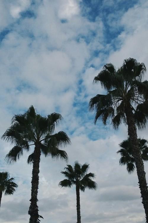 Vaporwave Iphone Wallpaper Palm Tree Wallpaper Tumblr