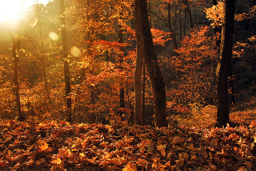 Cozy Fall Hd Wallpaper Woodland Aesthetic Tumblr