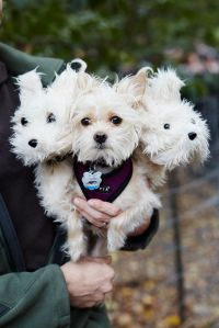 Refinery29 - The 40+ Best Dog Costumes EVER There is ...