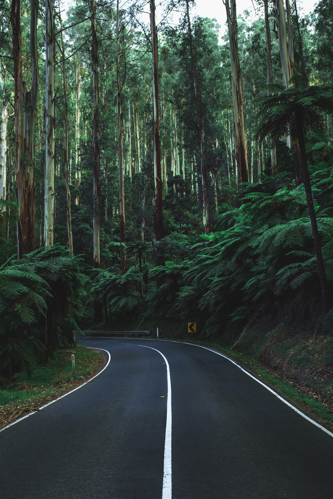 Forest Iphone Wallpaper Chase Your Dreams