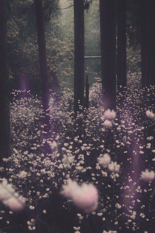 Faerie Girl Wallpaper Magic Forest On Tumblr