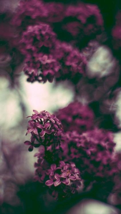 Black And Pink Floral Wallpaper Flowers Lockscreen Tumblr