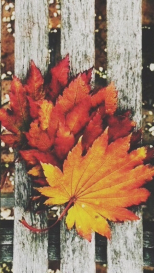 Fall Themed Iphone Wallpapers