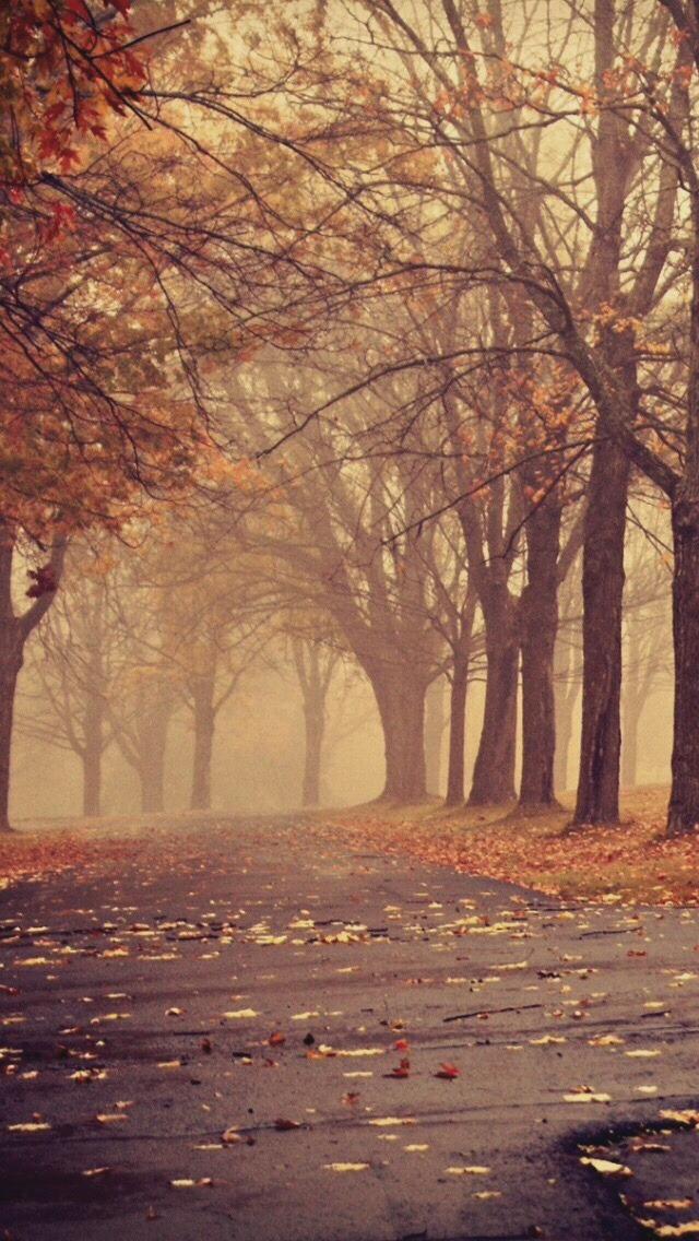 Fall Mist Wallpaper Falling For The Autumn Lockscreens Phone Backgrounds
