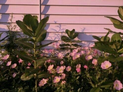 Rose Flower Garden Hd Wallpaper Pink Flowers On Tumblr