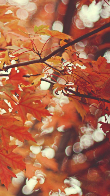 Fall Leaves Falling Wallpaper Chill Iphone Wallpaper Tumblr